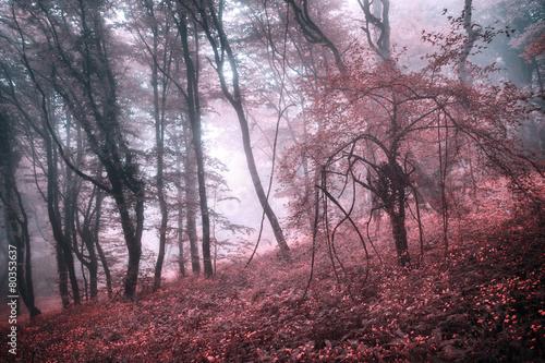 tajemniczy-wiosenny-las-we-mgle-z-rozowymi-liscmi-i-czerwonymi-kwiatami