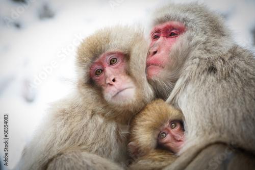 Fotobehang Aap 厳冬に耐え子どもを守り寄り添う猿の家族