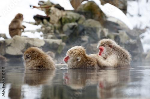 Keuken foto achterwand Aap 雪の露天温泉に浸かる猿の親子