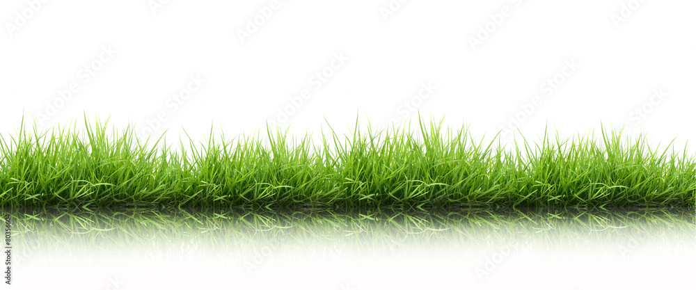 Fototapety, obrazy: fresh spring green grass isolated