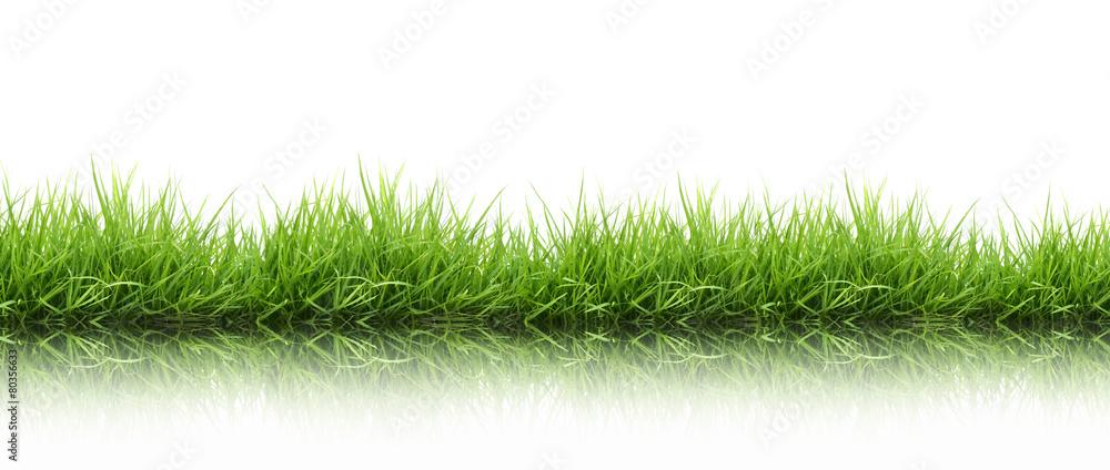 Fototapety, obrazy: fresh spring green grass isolated