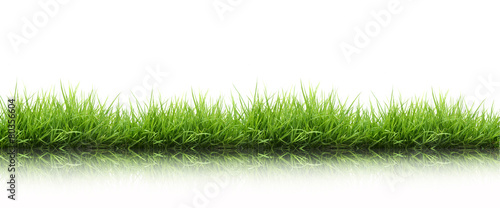Photo sur Toile Herbe fresh spring green grass isolated