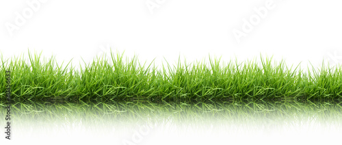 Deurstickers Gras fresh spring green grass isolated