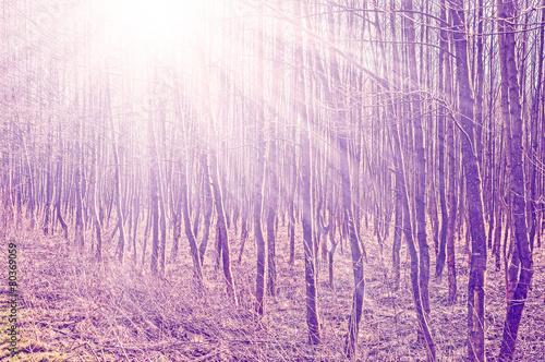 rocznik-filtrujaca-fotografia-drzewa-z-slonce-promieniami
