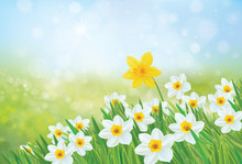 Vector Spring Nature Backgroun...