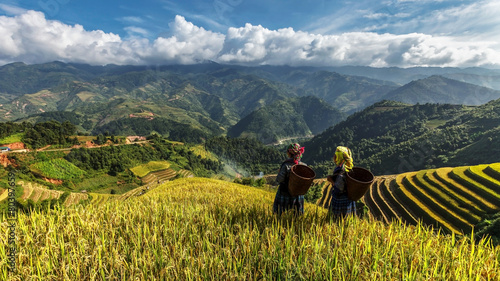 Foto auf Gartenposter Reisfelder Rice fields on terraced of Mu Cang Chai.