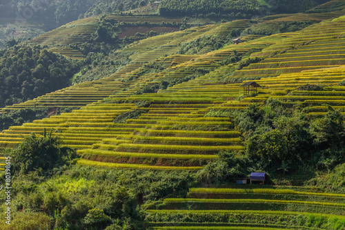 Aluminium Prints Rice fields Rice terraces on the mountain.Mu cang chai,Vietnam.