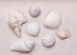 Zen garden with a collection of sea shells in the white grain sa