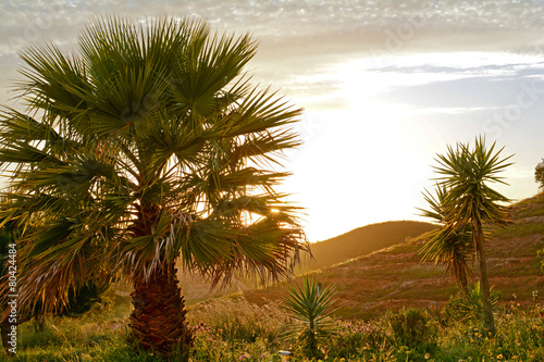 Fotografie, Obraz  Palm tree in a mediterranean landscape in the evening sun