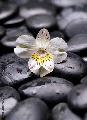 piekna-nowa-orchidea-i-mokre-kamienie