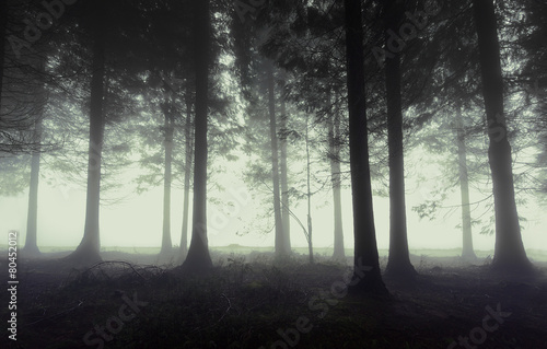 Papiers peints Forets gloomy forest with fog