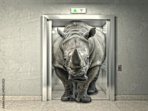 Poster Rhino strong elevator