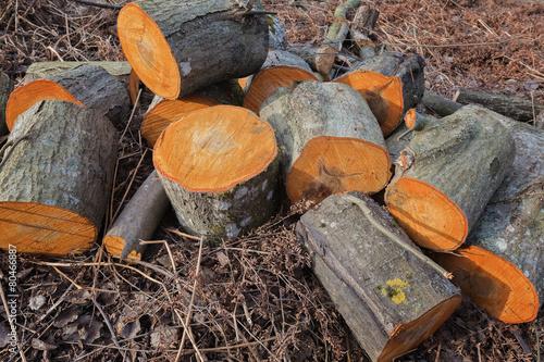 Keuken foto achterwand Brandhout textuur Firewood.