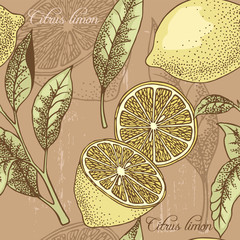 Panel Szklany Owoce Vintage lemon seamless background