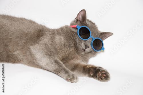 Canvas Print Buffo gatto con occhiali da sole