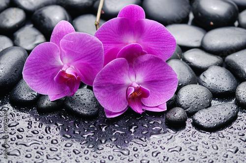 Papiers peints Spa pink orchid on zen pebbles on wet background