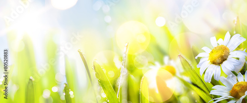 Door stickers Spring art abstract sunny springr flower background