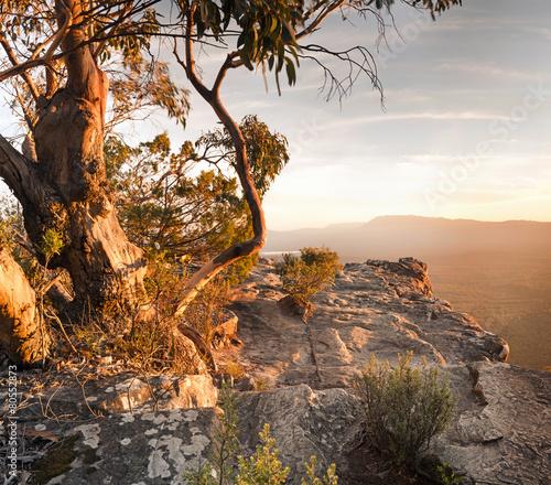 Printed kitchen splashbacks Australia Australian Bush Landscape