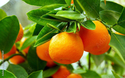 oranger Tapéta, Fotótapéta