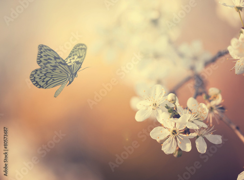 Fototapety, obrazy: Pastel colored photo of butterfly and spring flowers