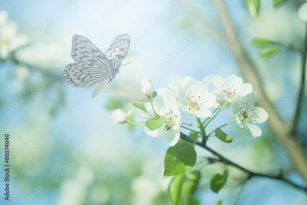 Fototapeta Pastel colored photo of butterfly and spring flowers