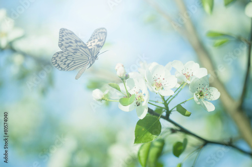 Pastel colored photo of butterfly and spring flowers - fototapety na wymiar
