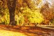Park in Wernigerode - Herbst