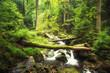 canvas print picture - Bachlauf im Wald - Ilsetal - Harz