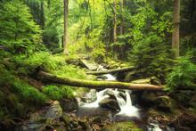Bachlauf Im Wald - Ilsetal - Harz