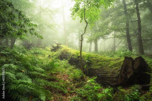 Spoed Foto op Canvas Grijze traf. Ökosysteme der Wälder