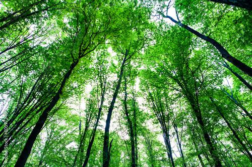 Foto op Plexiglas Groene forest trees