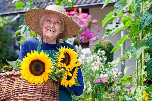 Fotografie, Obraz  Happy Old Woman with Baskets of Fresh Sunflowers.