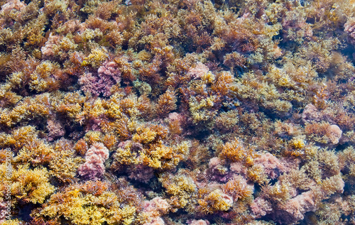 Fototapety, obrazy: Abstract Background - Multicolor herbal seaweed on the beach. My
