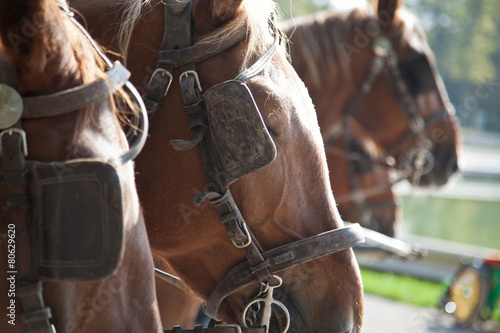 Photo horses with blinders