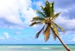 Palm tree over caribbean sea