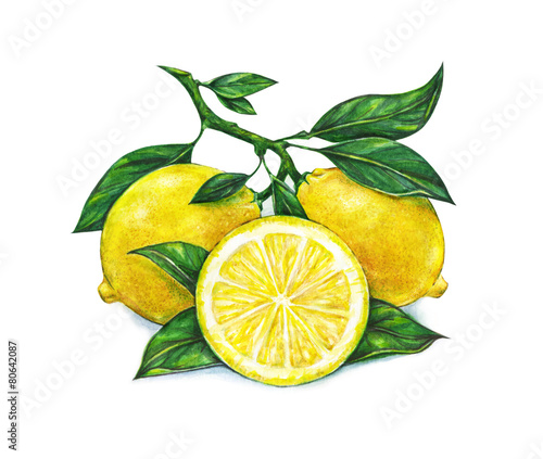 Fotografia, Obraz  Watercolor drawing of lemon