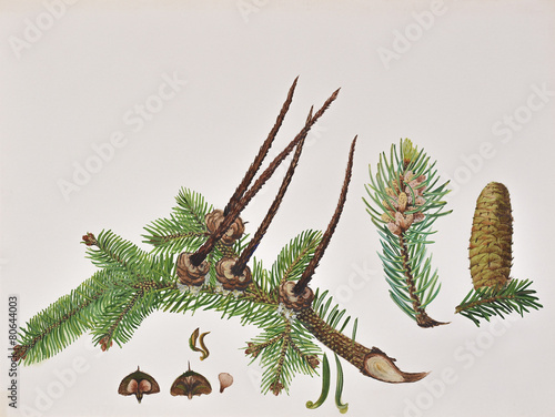 Original painting with pine cones of Romanian forest Wallpaper Mural