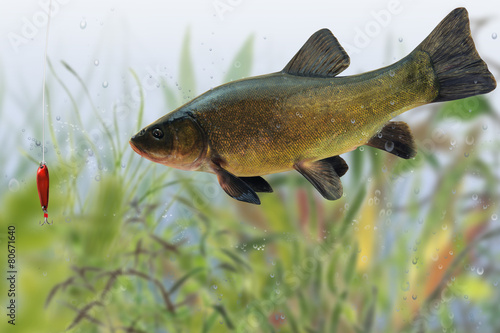 Fotografija  Fische 75