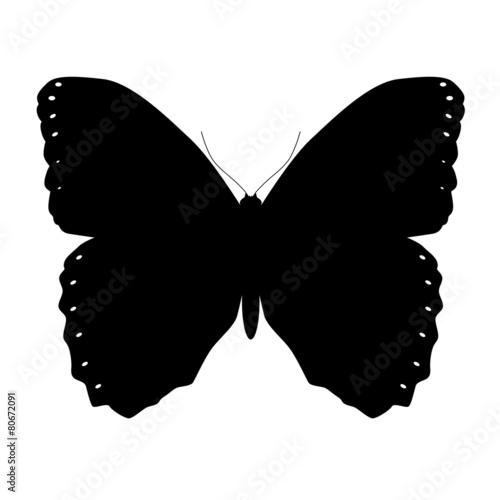 schmetterling silhouette