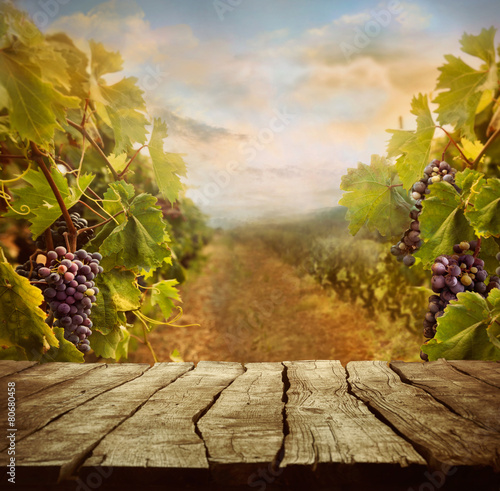 Photo sur Aluminium Vignoble Vineyard design