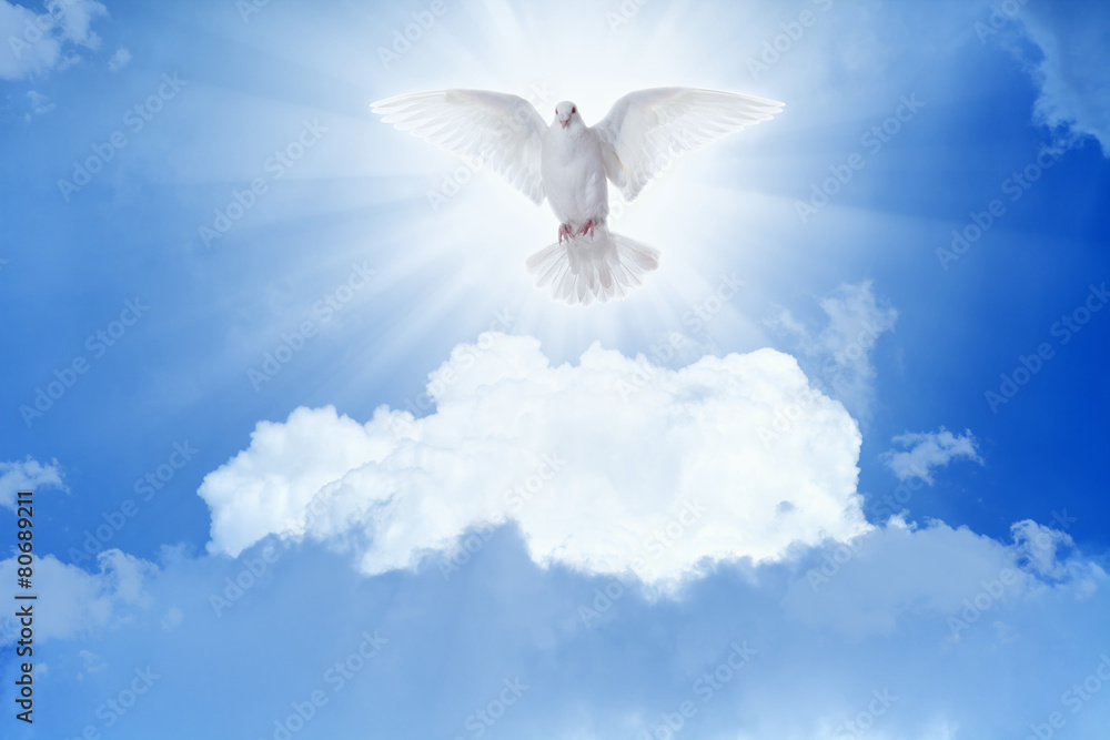 White dove flies in skies