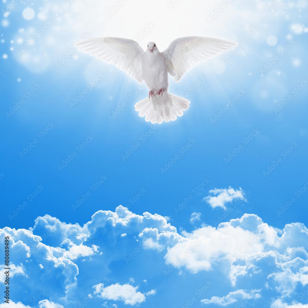 White dove in skies