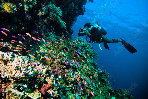 Fotobehang Duiken diver photo video seafan kapoposang indonesia scuba diving
