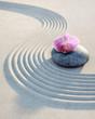 Orchidee auf Stein im Sand 1