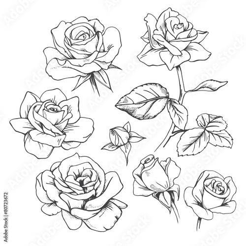 Set Of Hand Drawn Roses Vector Buy This Stock Vector And Explore