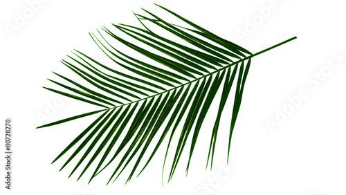 Poster Palm boom Grüne Palmen Blatt