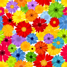 Vector Seamless Pattern With Colorful Gerbera Flowers.