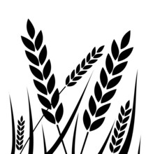 Agricultural - Wheat Icon - Illustration