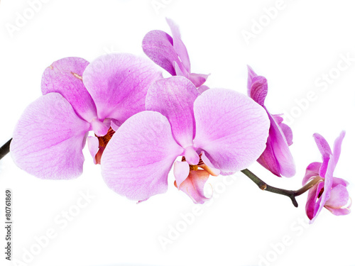 Photo Stands Orchid Orchidee isoliert