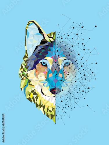 Fotografie, Obraz  Wolf head in geometric pattern with star line vector
